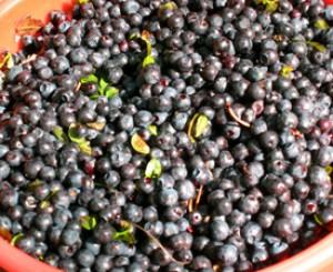 Wild Blueberry Mimosa